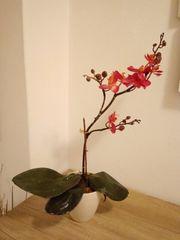 Kunststoff Orchidee