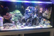 Meerwasser 54l mit Technik ohne