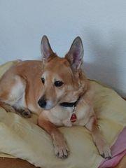 Dogsitter in Mannheim Volgestang gesucht