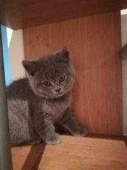 BKH Kätzche