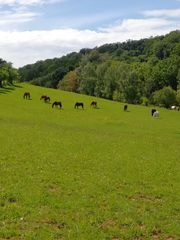Pferdepension Kiefhaber