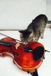 Violin Bratschen Unterricht