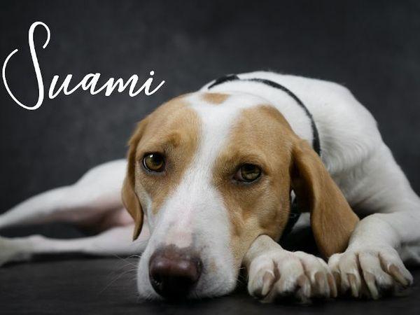 Suami sucht ihr Zuhause