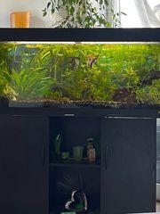 Aquarium mit Besatz