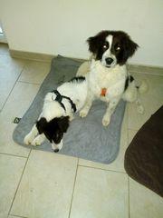 2 tolle Tierschutz hunde Mädchen