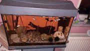60 Liter Aquarium mit zubehör