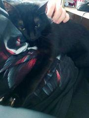 Süße schwarze Katze sucht Katzenfreundliches