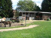 1 Pferde Aussenbox mit tgl