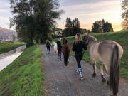 Hoftage Reitunterricht Ponyreiten Pflegepony