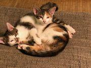 Süsse Baby Katzen