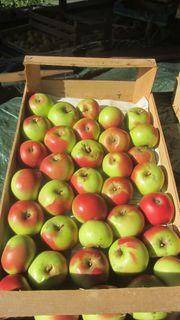 Bio - Tafeläpfel