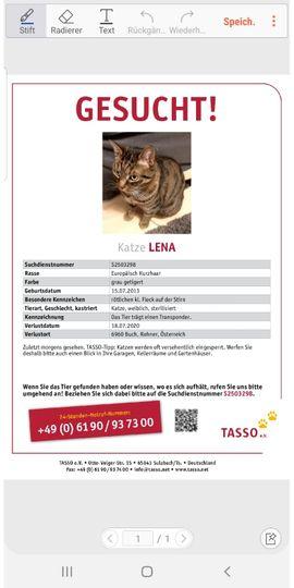Entlaufen, Entflogen - Wir suchen unsere Katze Lena