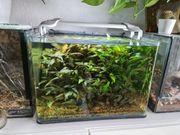 Aquarium Nano 35 l Dennerle