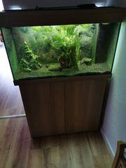 Aquarium von juvel