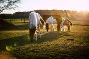 Deine Zeit mit Pferden