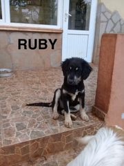 Ruby sucht Dich