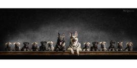Hunde - Osteuropäischer Schäferhund Welpen Wurfplanung- DNA