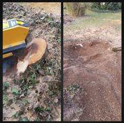 Baumstumpf entfernen schnell und kostengünstig