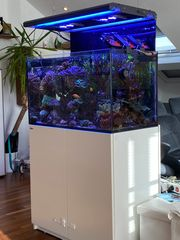 Meerwasseraquarium Red Sea Reefer 250