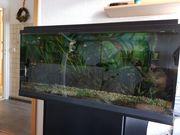 Verkaufe 180 l Aquarium 2