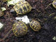 Land Wasserschildkröten
