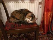17 jährige Katzenseniorin sucht wegen