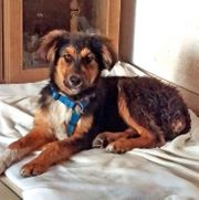 Marley 5 Monate sucht ruhige