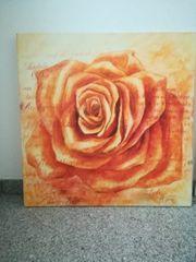 Bild Rose in Gelb auf