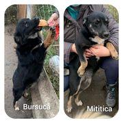 BURSUCA MITITICA - zwei junge Mädchen