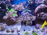 Meerwasser LPS und SPS Korallen