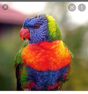 Papagei gesucht