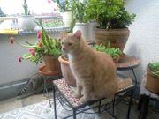 Katzenbetreuung Katzensitter Kleintiere Sonstige Kleintiere