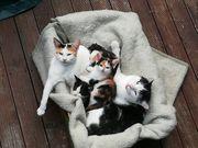 Hauskatzenbabys