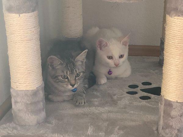 Bezaubernde Katzengeschwister