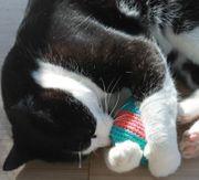 Katzenspielzeug Kisselchen