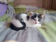 4 süße Kätzchen 3 Monate