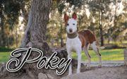 Poky sehnt sich nach Liebe