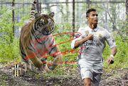 Cristiano Ronaldo Tiger Kunstdruck 45x30