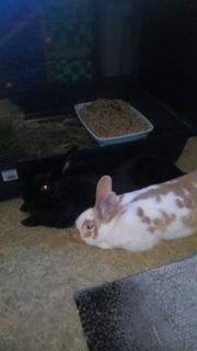 Hasen Kaninchen Babys abzugeben
