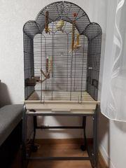 Kanarienvögel Kanarien Pärchen Vogel Kanarienvogel