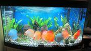 Süsswasseraquarium inkl Fische und Zubehör