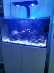 Meerwasser Aquarium komplett Auflösung