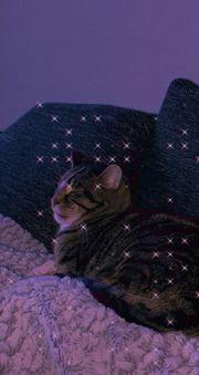 Tiersitting Tierbetreuung Hund Katze andere