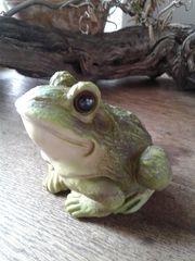 Frosch - Kröte