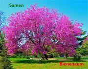 Bienenbaum 10 frische Samen 5