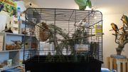 Biete 1Pärchen Zebrafinken mit Käfig