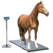 Mobile Pferdewaage Pferde wiegen Stockmaß