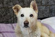 JONNE - ein lieber Hundesenior sucht