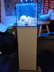 Komplettes Nano-Meerwasseraquarium