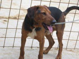 Tierschutzvereine, -heime - Tembo sucht SEINE Familie - NOTFALL